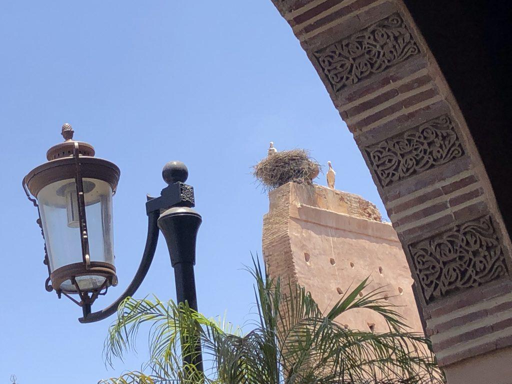 cicogne a Marrakech