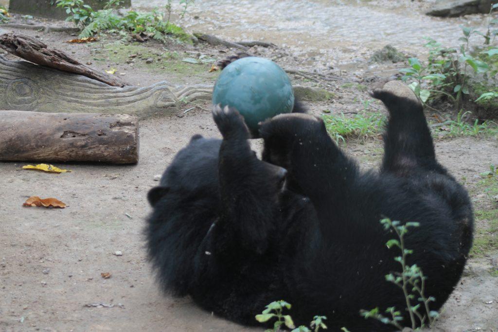 Il Tat Kuang Si Bear Rescue Centre Luang Prabang