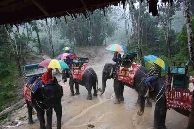 sfruttamento elefanti trekking