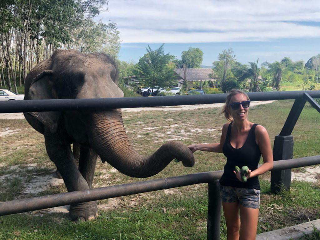 feeding Phuket Elephant Park