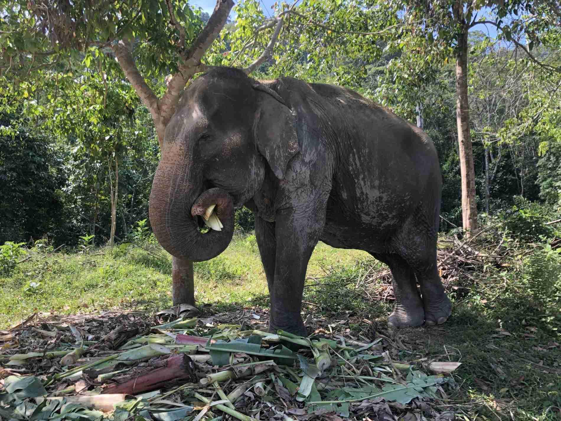 Phuket Elephant Park