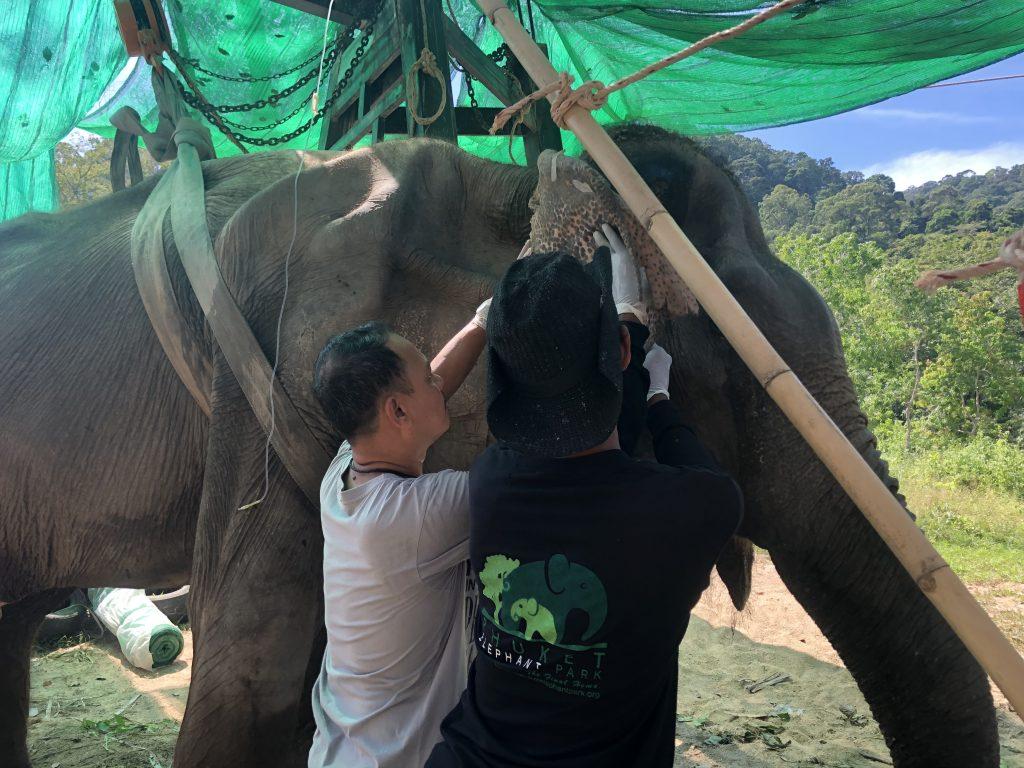 Boonsib Phuket Elephant Park