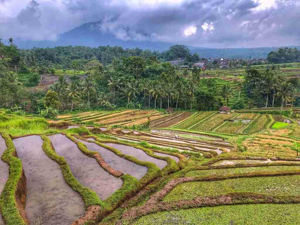 risaie a Bali