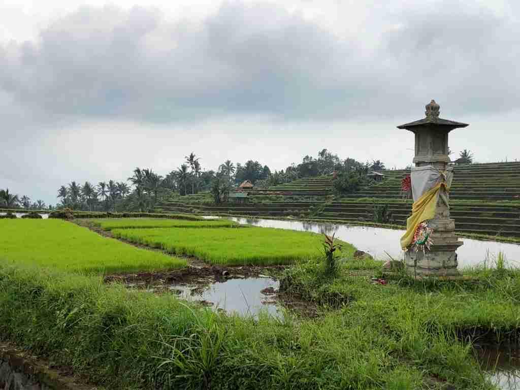 tempietto nella risaia