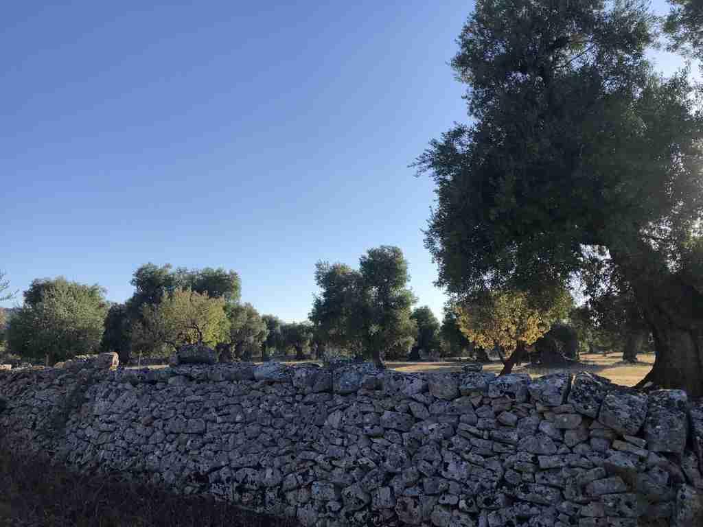 muretti a secco Valle d'Itria
