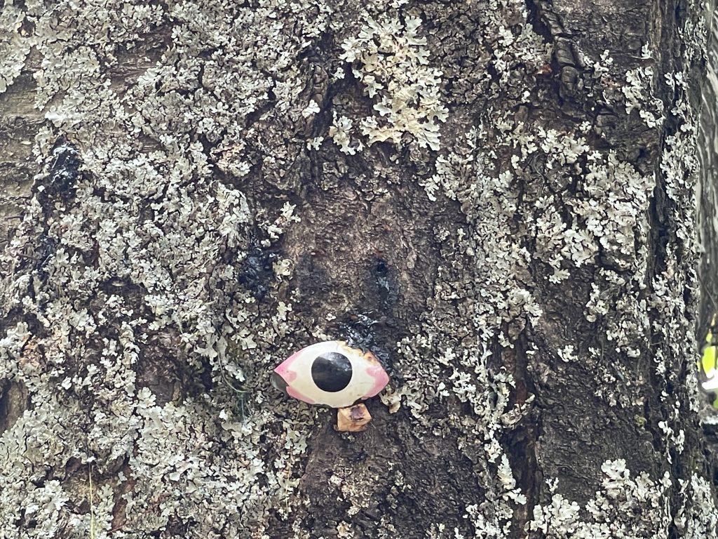 albero con gli occhi Terzani